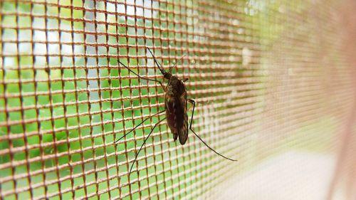 ¿Qué hacer contra las picaduras de mosquito?