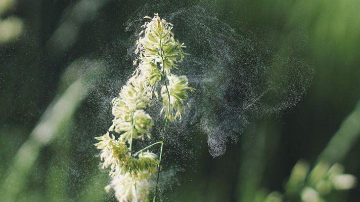 ¿Cómo combatir la alergia al polen?